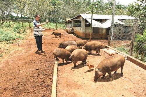 Quy định về cơ sở chăn nuôi làm khó người nông dân?