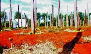 Để tránh những bất cập trong phát triển nông nghiệp