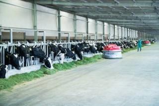 Dấu ấn Vinamilk trong ngành chăn nuôi bò sữa công nghệ cao Việt Nam