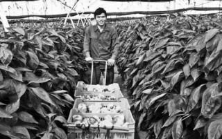Doanh nghiệp khởi nghiệp nông nghiệp: Phải xác định sẽ đi đường dài
