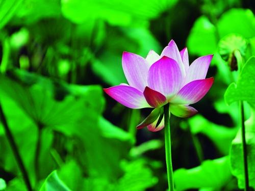 Biến tướng trào lưu chụp ảnh hoa