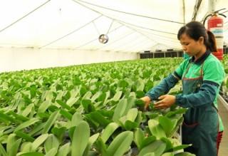 Nông nghiệp Hà Nội: Lấy công nghệ cao làm trọng tâm