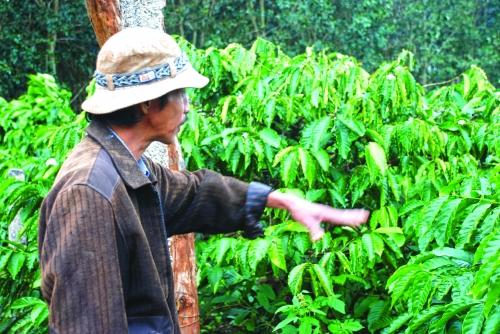 Cà phê Việt, bao giờ hết xuất thô?