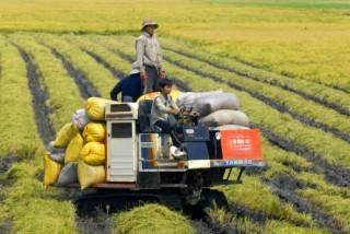 Tái cơ cấu nông nghiệp theo hướng giảm trồng lúa
