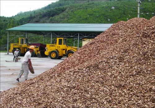 Tăng thuế xuất khẩu dăm gỗ - cần cân nhắc cẩn trọng