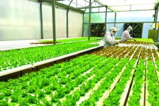 Xuất khẩu chính ngạch với nông sản Việt: Vẫn còn nhiều thách thức