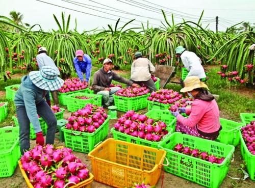 FTA - cơ hội cho nông nghiệp Việt