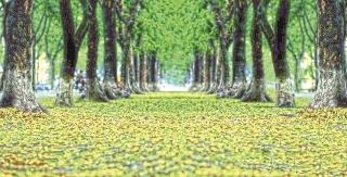 Giá trị của cây xanh đô thị