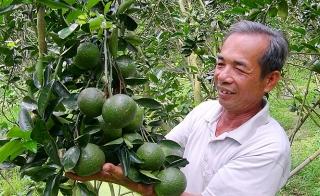 Tiếp sức phát triển nhanh mô hình trồng cam