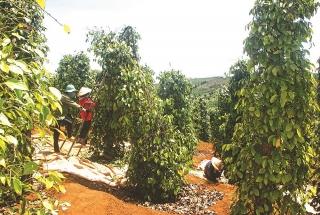 Xác định lợi thế để phát triển nông nghiệp