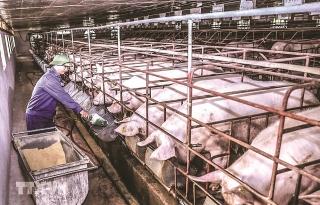 Phát triển chăn nuôi bền vững bằng công nghệ sinh học