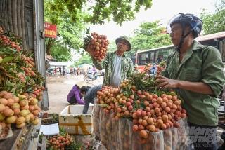 Ngân hàng tham gia cứu giá nông sản