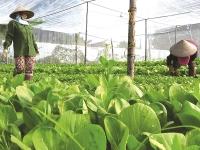 Agribank cùng phụ nữ phát triển kinh tế