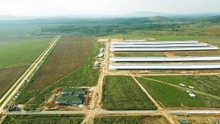 Đàn bò 8.000 con đầu tiên tại tổ hợp trang trại của Vinamilk tại Lào sẽ cho sữa vào đầu năm 2022