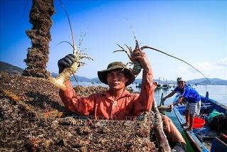 Tăng đầu tư cho hạ tầng ngành thủy sản