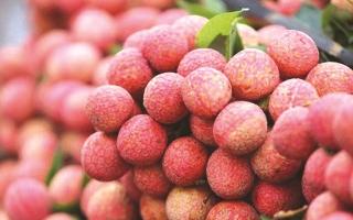 Từ vải thiều nghĩ đến thương hiệu trái cây Việt