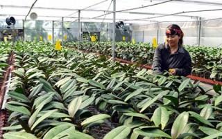 JICA hoàn tất dự án tăng cường chức năng hợp tác xã nông nghiệp ở Việt Nam