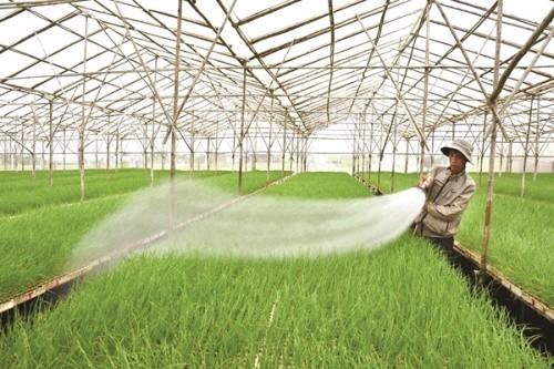 Nhân rộng mô hình liên kết để đẩy mạnh tái cơ cấu nông nghiệp