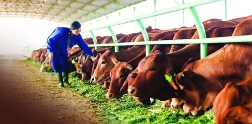 Trả lời kiến nghị của DN về việc chuyển đổi mô hình chăn nuôi