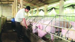 Phát triển kinh tế trang trại bền vững: Tháo gỡ nút thắt về đất đai