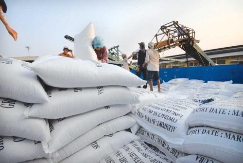DN Việt trúng thầu 175.000 tấn gạo bán cho Philippines