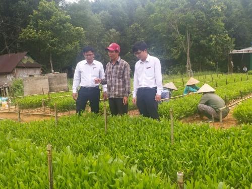 Tiếp vốn cho nông dân làm giàu