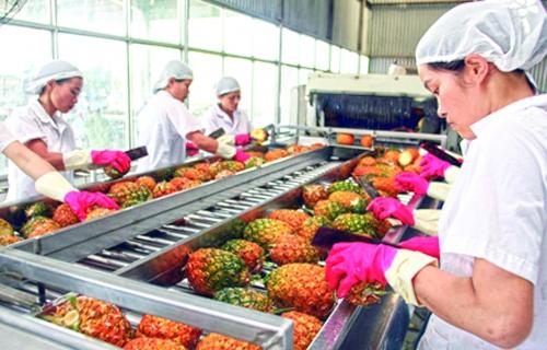 Xuất khẩu nông sản sau các FTA: Hiểu rõ để tránh chủ quan