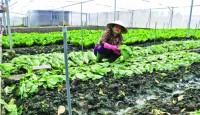 TP. Hồ Chí Minh: Loay hoay với nông nghiệp 4.0