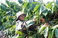 Chuyển đổi nông nghiệp để bền vững hơn