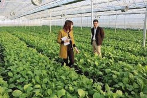 Khuyến khích, thúc đẩy đầu tư vào nông nghiệp: Tăng cường kết nối ngân hàng - doanh nghiệp