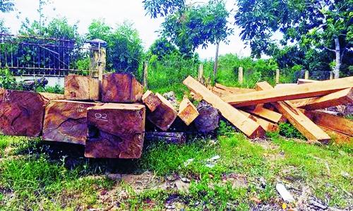 Gia Lai - an ninh rừng đang bị đe dọa
