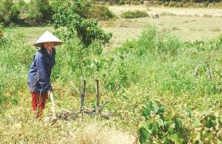 Giải pháp nào để tránh lãng phí đất nông nghiệp?