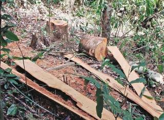 Cần những giải pháp đồng bộ để giữ rừng