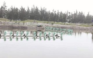 Nan giải thị trường giống thủy sản