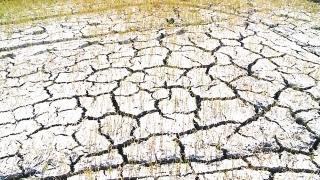 Nam Trung Bộ: Nhiều diện tích cây trồng đang khô khát