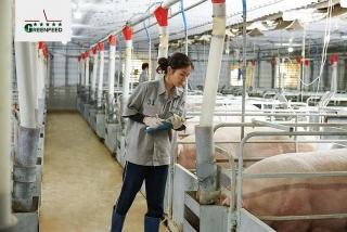 IFCHỗ trợ Công ty Cổ phầnGREENFEEDViệt Nam mở rộng chăn nuôibền vững