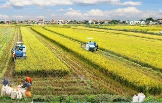 Nhiều chính sách tín dụng trợ đỡ phát triển nông nghiệp, nông thôn