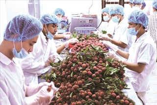 Cần phát triển tư duy kinh tế nông nghiệp