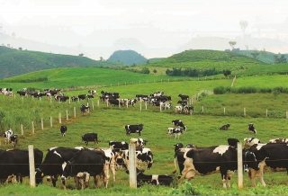 """Thủ tục hành chính """"trói chân"""" doanh nghiệp nông nghiệp"""