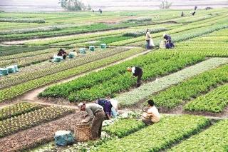 Thận trọng chuyển đổi đất nông nghiệp