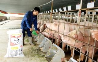 Vốn lớn đổ vào chăn nuôi