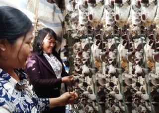 Điển hình về uỷ thác vay vốn chính sách trên cao nguyên Lâm Đồng