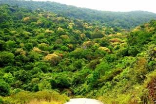 Còn nhiều khoảng trống và thách thức trong khai thác kinh tế từ rừng tự nhiên