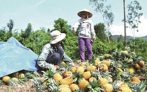 Chú trọng xuất khẩu rau quả vào Trung Quốc