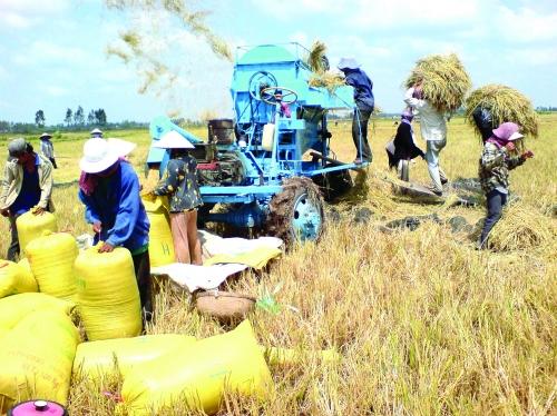 Gạo Việt vẫn đuối về giá