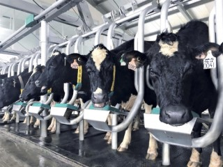 Vinamilk giới thiệu sữa tươi 100% A2 đầu tiên tại Việt Nam