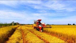 Nông nghiệp Việt Nam: Phải giải bài toán thua ngay trên sân nhà