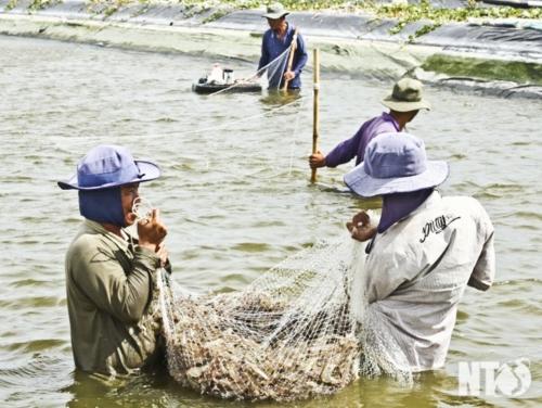 Kêu gọi đầu tư vào các trung tâm nghề cá