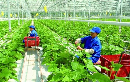 Thúc đẩy ứng dụng khoa học công nghệ vào nông nghiệp