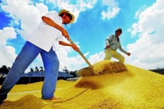 """Tăng cơ hội việc làm để ngăn """"sa mạc nông thôn"""""""
